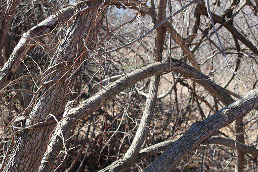 Branches, Limbs, Trees, Gnarled, Bare, Leafless, Wood
