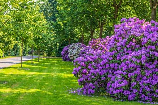 Flowers, Bush, Garden, Plant, Nature, Floral, Leaf