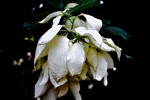 White, Flower, White Flower, Night, Background, Summer