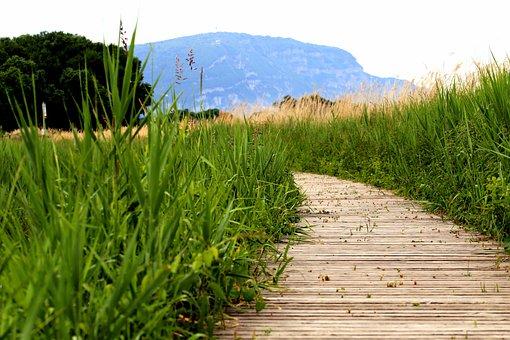 Meadow, Grass, Green, Field, Spring, Park, Natural