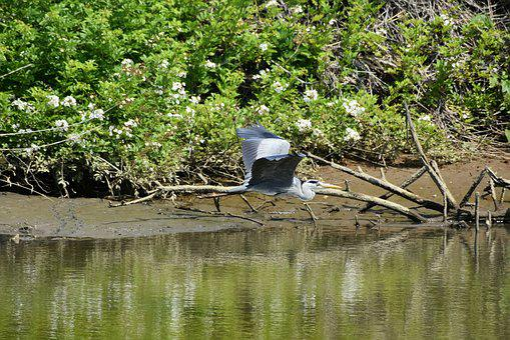 Animal, River, Wood, Green, Waterside, Bird, Wild Birds