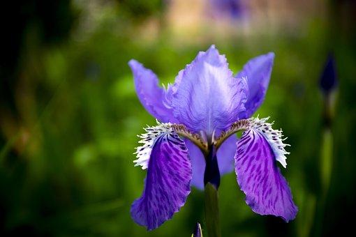 Flower, Flora, Sunlight, Spring, Blossom, Nature, Plant