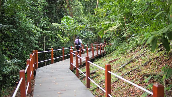 Park, Tourism, Tourist, Walking, Path, Forest, Garden