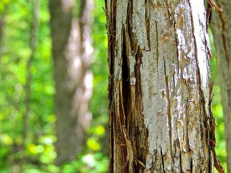 Bark, Tree Bark, Tree, Wood, Pattern, Brown, Surface