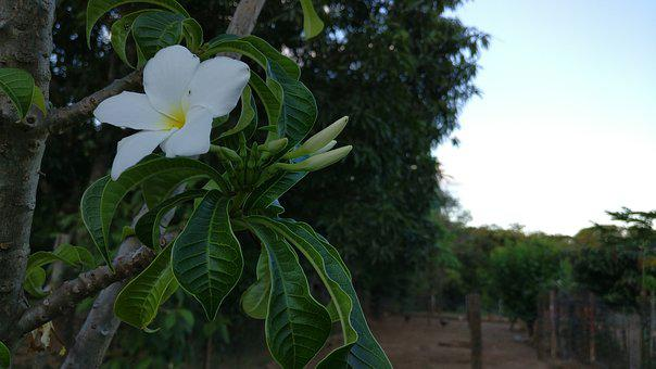 Flower, Nature, Green, White Flower, Afternoon, Tree