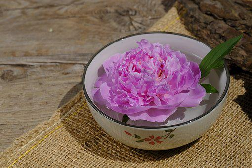 Wellness, Beauty, Relaxation, Physio, Peony, Rose