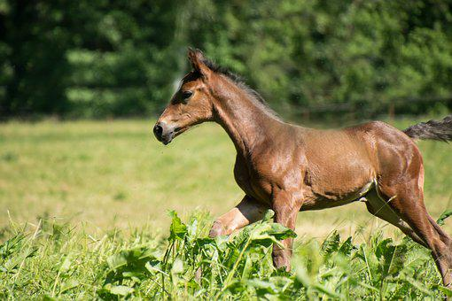 Horse, Foal, Young, Small, Race, Play, Coupling, Meadow