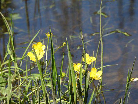 A Yellow Flower, Lake Shore, Lake, Beach, Water, Nature