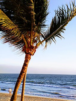 Beach, Palms, Couple, Sand