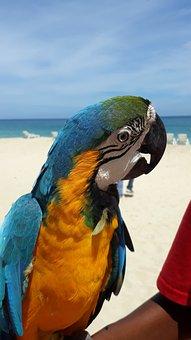 Beach, Parrot, Macaw