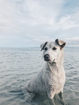 Dog, Pet, Swimming, Wet, Animal, Puppy, Canine, Cute