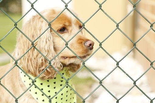 Dog, Dog Behind Bars, Dog Locked Up, Dog Concerned