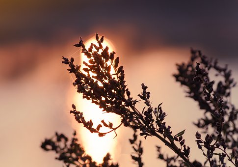 Dry Plant, Evening Time, Poetic Mood, The Silhouette