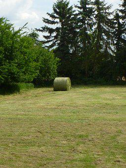 Hay Bales, Hay, Meadow, Agriculture, Field, Harvest