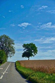 Road, Perspective, Tree, Crop, Landscape, Highway