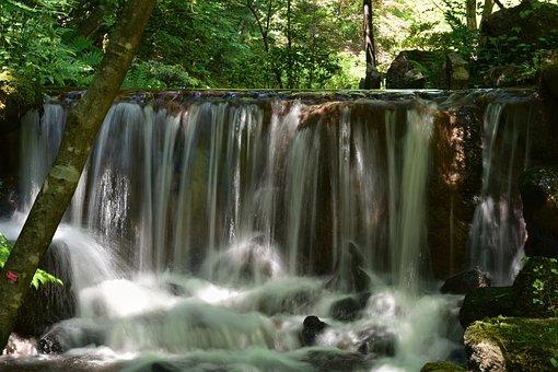 Natural, Landscape, Forest, Wood, Leaf, Green, Rock