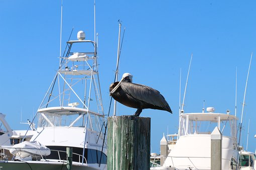 Yacht, Florida, Boat, Bird, Natural, Touristic, Relax