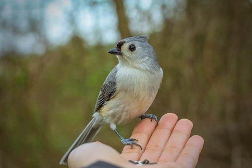 Bird, Bird On Hand, Feeding Birds, Hand, Nature, Animal