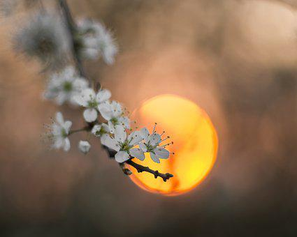 Sun, Flowers, Tree, Nature, Blossom, Season, Blooming