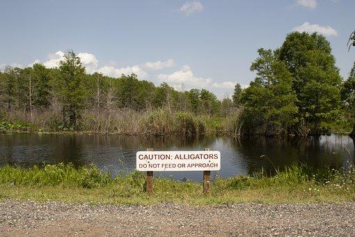 Wetland, Alligator, Do Not Feed, Nature, Wildlife