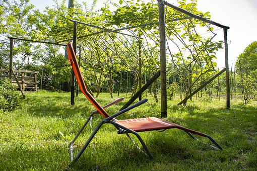 Relaxation, Garden, Campaign, Green, Nature, Natural