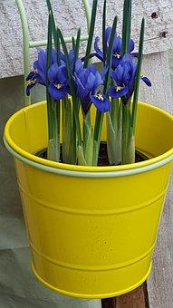 Plant, Hyacinth, Nature, Flower, Closeup, Green, Plants