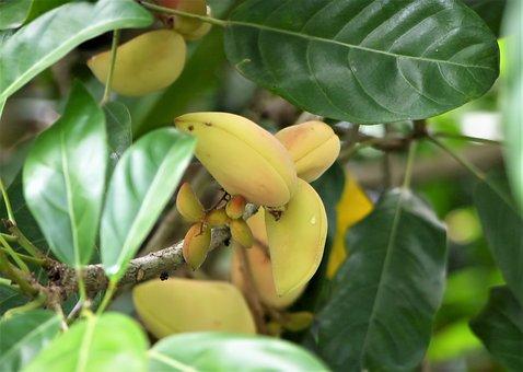 Fresh, Natural, Nature, Fruit, Wild, Green, Organic