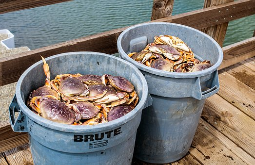 Fresh Dungeness Crab, Live, Crab, Market, Ocean, Sea