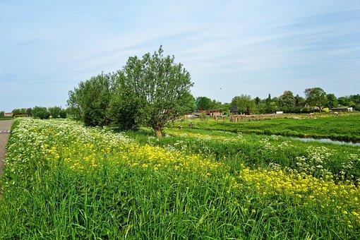 Field, Rape Seed, Flower, Plant, Road, Tree, Farm House
