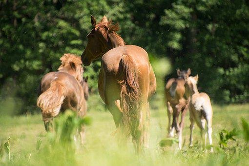 Horse, Race, Animal, Foal, Mare, Stallion, Coupling