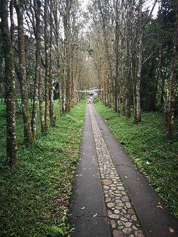 Path, People, Trail, Rural Road, Walk