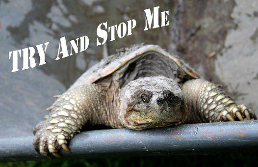 Motivational Quote, Try And Stop Me, Snapping Turtle