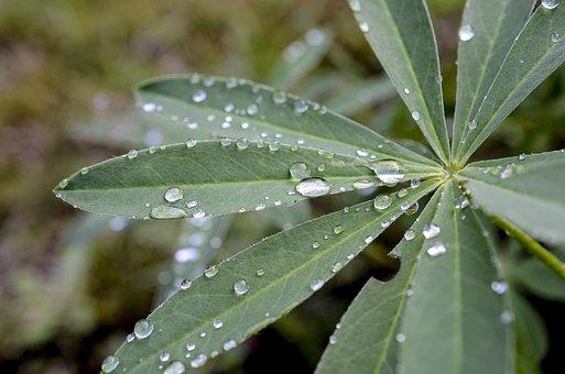Plants, Leaf, Plant, Nature, Garden, Summer