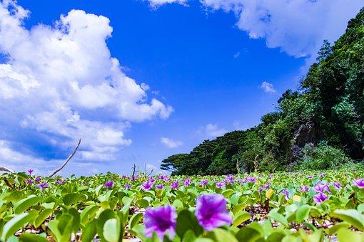 Ishigaki, Okinawa, Sea, Landscape, Summer, Seaside
