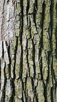 Tree Bark, Texture, Wood, Bark, Nature, Pattern