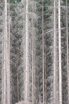 Calamity, The Jeseníky Mountains, Nature, Landscape
