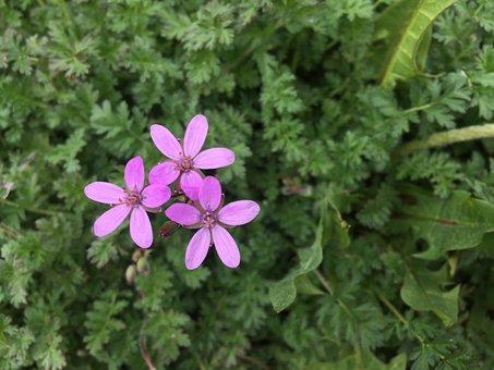 Flowers, Purple, Spring, Three, Plant, Garden, Natural