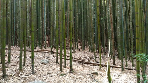 Bamboo, Mountain, The Scenery, Tree, Tourism, Natural