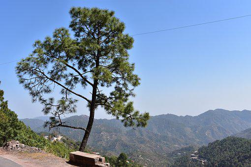 Nature, Tree, Green, Mountains, Hills, Uphills