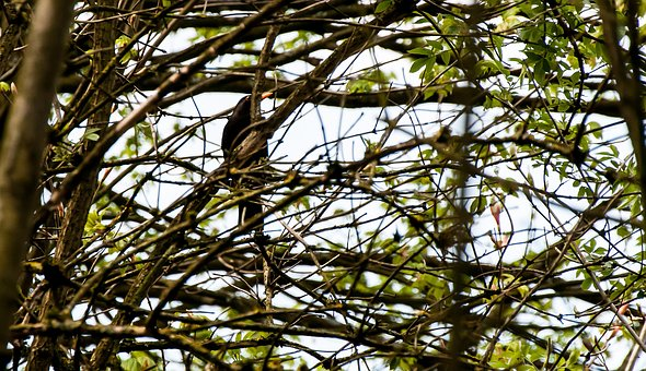 Bird, Tree, Nature, Animal World, Sitting