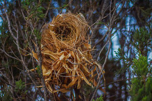 Bird, Nest, Photography, Branch, Beak, Animal, Wild