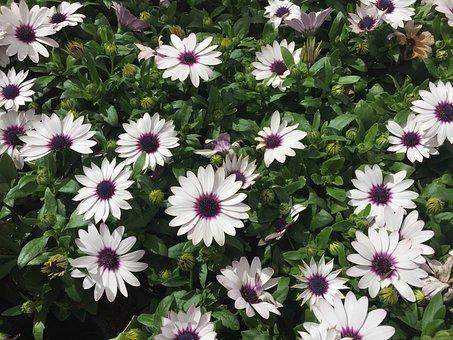 Purple Flowers, Flowers, A Lot, Purple Flower, Nature