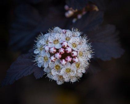 Flower, Blossom, Bloom, Bloom, Spring, Bud, White