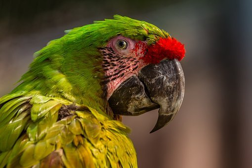 Zoo, Parrot, Colorful, Ara, Color, Exotic