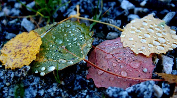 Leaf, Autumn, Colors, Water Drops, Fallen Leaves