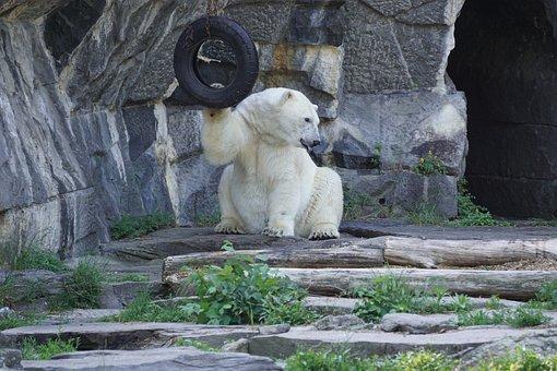 Polar Bear, Animal World, Predator, Zoo, Animal, Fur