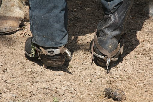 Feet, Horse, Riding Boots, Buckles, Boots Horse Riding