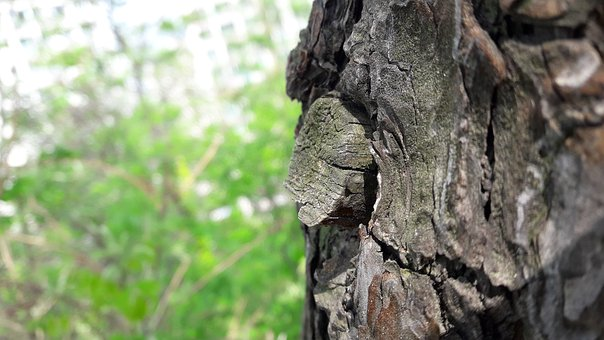 In The Forest, And Thu, Wood, Nature, Mountain, Bark
