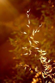 Grass, Light, Lit, Bed, Plants