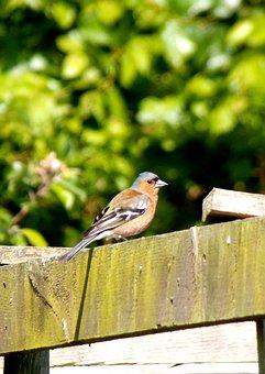 Bird, Little Bird, Garden, Feathers, Nature